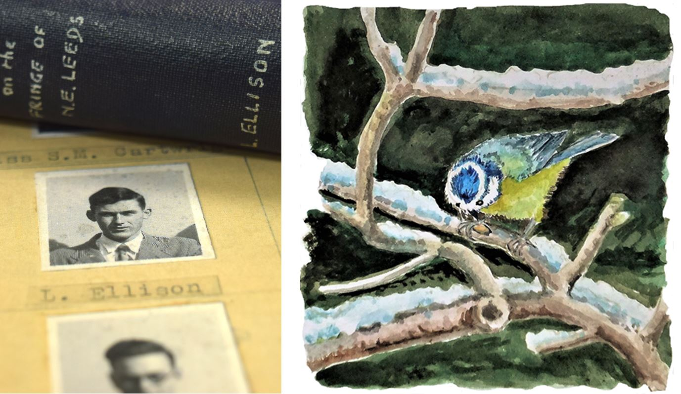 Illustration of book and bird by Leslie Ellison