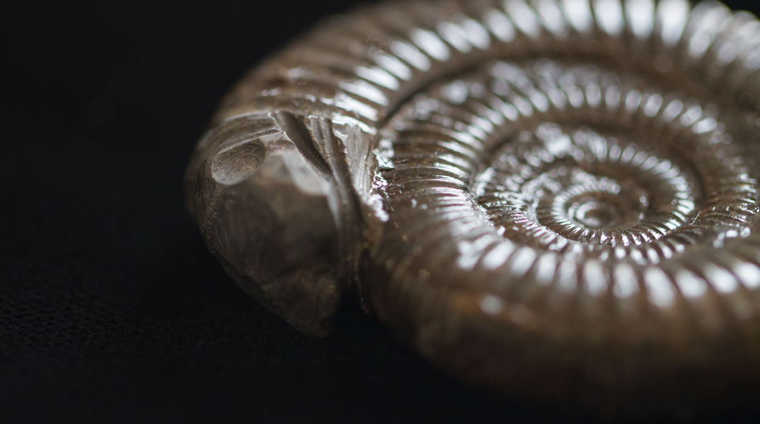 Petrified snakes